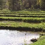 Utworzenie Ścieżki edukacyjnej pn. Stawy rybne w Ojcowskim Parku Narodowym wraz z organizacją szkolenia