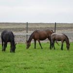 Utworzenie bazy rekreacyjno-turystycznej, udostępnienie usług w zakresie hipoterapii, jazdy konnej oraz usług świadczonych powozami konnymi